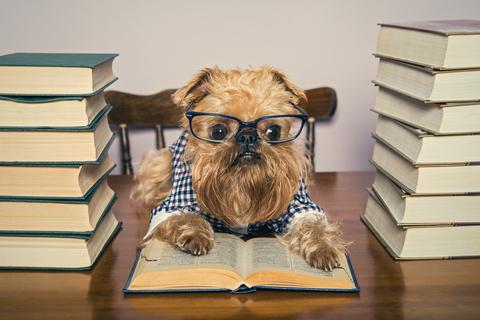 dog-reading-books